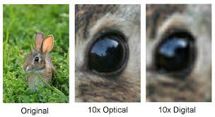 Optical vs digital zoom example image explained with rabbit eyes